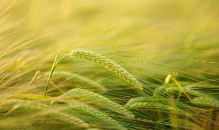 ozone et agriculture